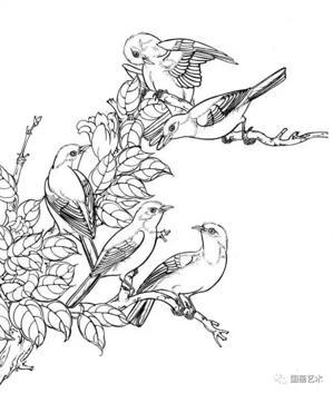 白描鸟类图谱,白描鸟图片,白描鸟设计素材,白描:鸟类画谱
