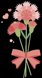 粉黛叶养护指南,全世界常见的观叶植物