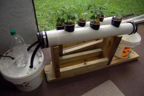 深受年轻人喜爱的水培盆栽系统,拿两根塑料管就能制作出来